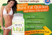 Premium Garcinia Cambogia Extract