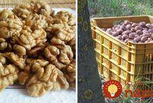 skladovanie orechov