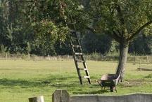 Viaţa la ţară/Country life