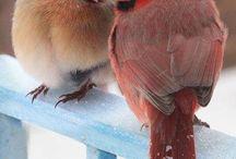 birds / by Corrina Kinsman-Rafuse