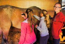 Wachumba Horses / Jazdecký tábor pre všetkých milovníkov koní https://www.wachumba.eu/detske-sportove-tabory/detsky-jazdecky-tabor-horses?pid=47%0A%0A