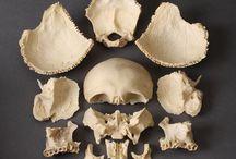 Anatomia / Imágenes curiosas sobre anatomía del cuerpo humano