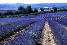 Travel :: Provence