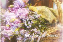 Romántic... / Sensibilidad, romanticismo... Flores!!