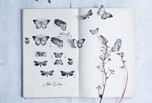 Papillons/Butterfly