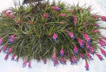 Plantas q absorben la humedad del hogar