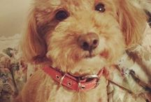 LOVE MY PUPPY  / ALL about my puppy!!! 愛犬 Kisses