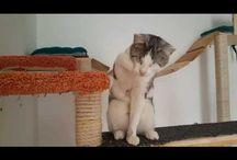 videos, gifs / Video gepostet von Meggie von Ritter auf G+