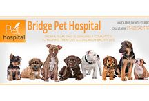 Bridge Pet Hospital for Emergency services in Lethbridge / Bridge Pet hospital offers emergency animal Hospital for pet care services at Lethbridge, Canada. Our staff excel in customer service and integrity to provide pet owners with thorough pet care services. Bridge Pet Hospital offers services you need to keep your pet happy and healthy with a huge selection of quality pet foods, pet products at reasonable prices. We are open Monday through Saturday.