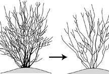 Pruning tips / How to prune all kinds of plants.