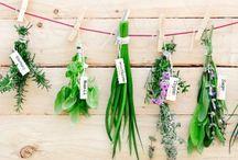 βότανα - φυτά