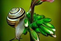 Escargots facetieux
