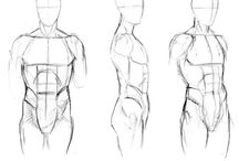 Anatomia, poses y bases