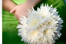 Chrysanthemum Wedding / Sweet . . . inexpensive . . yet so chic and in vogue right now!  Check out creative ways to use chrysanthemums in your wedding flowers.