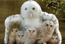 *****Owls***** / Owls are so beautiful, unusual and fluffy