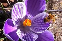 In my garden / by Rachel Williams