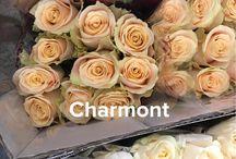 Rose Colors/Varieties