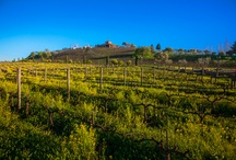 Vines to Wines / by Viansa Sonoma
