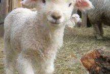 Party: Lamb