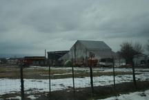 Farm Life - Homesteading! / by Mia Hastig