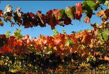 WineWorld, Chile