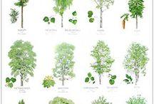 Ympäristö ja luonto