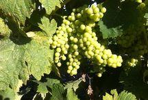 GeoWine | GeoApp World / Wine