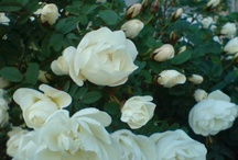 Kukkia-flowers