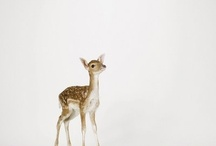 Doe a Deer / by Nicole Evangelista