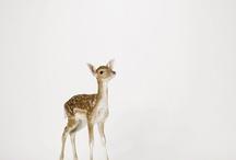 Doe a Deer / by Nicole Evangelista