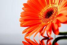 Flowers / by Steph Sturm
