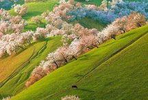 SPRING / Season of Spring