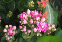 Flowers / beauty