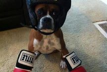 Boxers / by Phyllis Hendrix