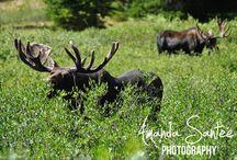 Photography {Outdoors, Wildlife, & Landscape} / Wildlife photography, outdoor photography, landscape photography, etc.