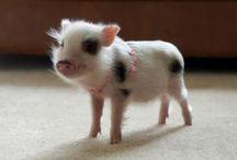 Crazily cute creatures