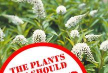 invader plants
