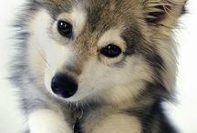 Puppys - Filhotes - Bebezinhos Fofos