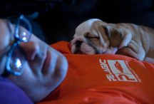 Myrtle Jo - My English Bulldog puppy! / My English Bulldog puppy! / by Justina Beres