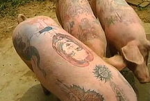 Tattoo Artists / by TattooForAWeek.com Temporary Tattoos