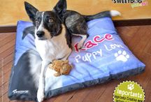 Pillows - Cuscini / Personalzied Dog Pillows, your dog can rest on a piece of Art! | Cuscini personalizzati per cani, il tuo cane dormirà su un vero e proprio oggetto d'Arte!