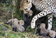 Animal Innocence