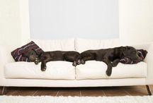 PA x Dog Friendly Apartments