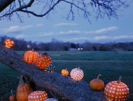 Fall/Halloween / by Susan Frusher