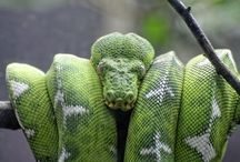 Käärmeet YÖK!