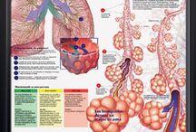 Asma / El Asma es una enfermedad inflamatoria crónica de las vías respiratorias, condicionada en parte por factores genéticos y que cursa con hiperrespuesta bronquial y una obstrucción variable al flujo aéreo, total o parcialmente reversible, ya sea por la acción medicamentosa o espontáneamente.  El asma causa sibilancia, falta de aire, presión en el pecho y tos durante la noche o temprano en la mañana.  http://www.lovexair.com/html/es/tus_pulmones/asma/