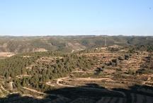 Pobla de Massaluca (Terra Alta) / by Viatges Baix Segrià