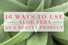 Aloe Vera / Benefits and uses of aloe vera