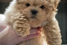 Cute pets I want someday.. / by Cheryl Lawlor-Mahala