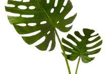 plants / plants / greenery / succulents / cacti / cactus / monstera leaf, / foliage / houseplants / cat-friendly plants
